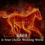 6869 wedding world is your choice