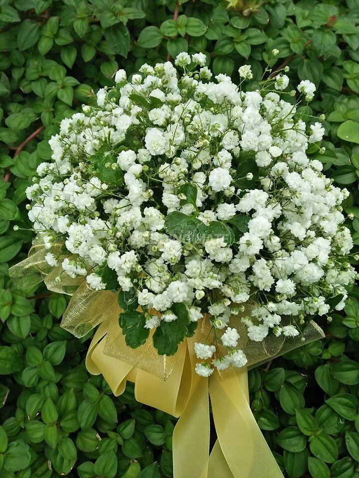 Bunga Bunga